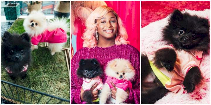 People are sending my dogs their account numbers - DJ Cuppy cries out