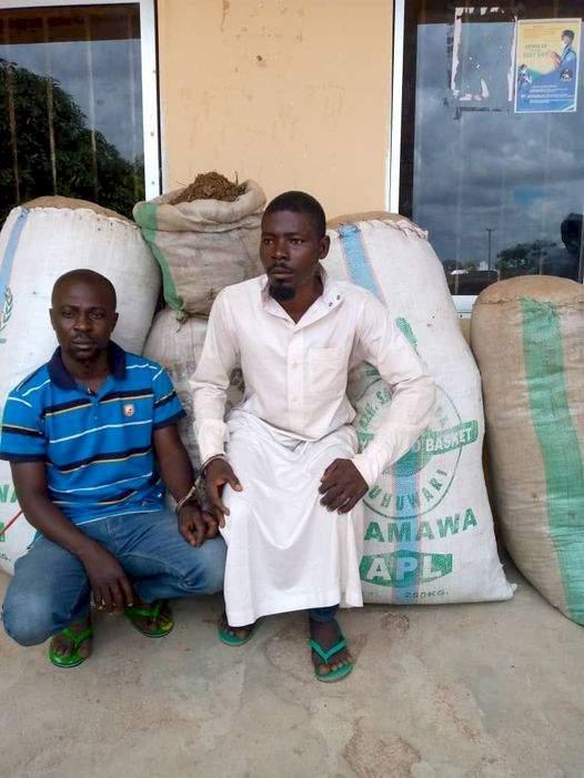 Police arrest two major drug dealers, seize large quantity of Indian hemp in Adamawa